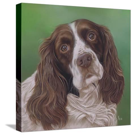 Springer Spaniel Fleck-Karie-Ann Cooper-Stretched Canvas Print