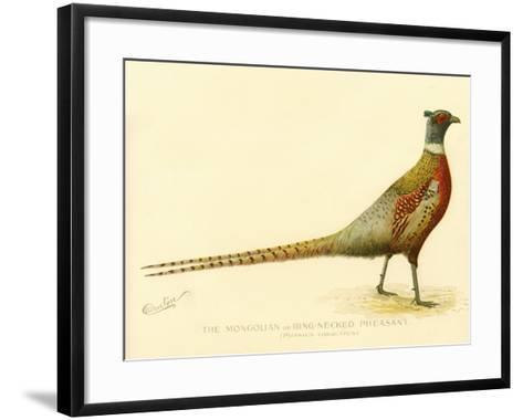 The Mongolian or Ring-Necked Pheasant--Framed Art Print