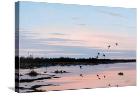 Sunset March Black Ducks-Wilhelm Goebel-Stretched Canvas Print