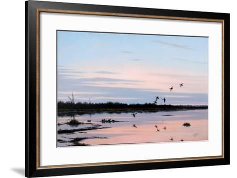 Sunset March Black Ducks-Wilhelm Goebel-Framed Art Print