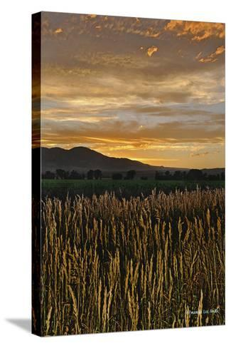 Sunset over Bear Tooth-Amanda Lee Smith-Stretched Canvas Print