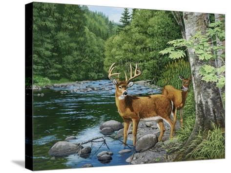 Streamside - White Tail Deer-William Vanderdasson-Stretched Canvas Print