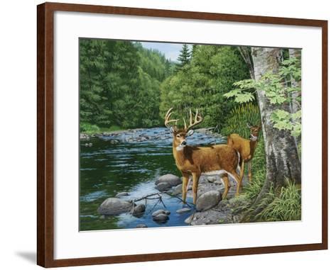 Streamside - White Tail Deer-William Vanderdasson-Framed Art Print