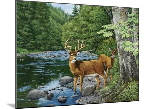 Streamside - White Tail Deer-William Vanderdasson-Mounted Giclee Print