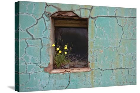 Window 3-Wayne Bradbury-Stretched Canvas Print