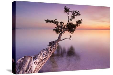 Water Tree XI-Moises Levy-Stretched Canvas Print