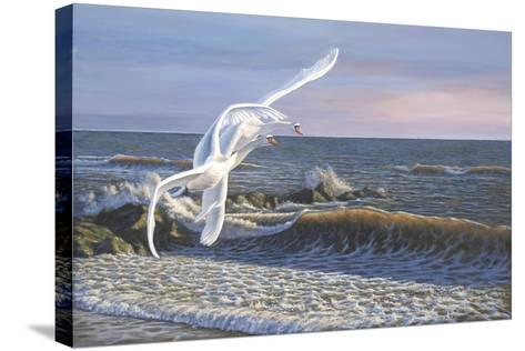 Wave Skimmers-Bruce Dumas-Stretched Canvas Print