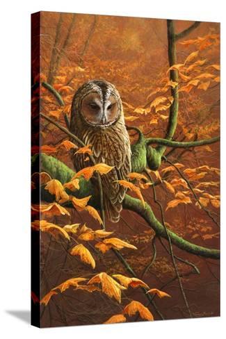 Autumn Tawny Owl-Jeremy Paul-Stretched Canvas Print