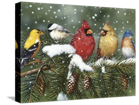 Backyard Birds on Snowy Branch-William Vanderdasson-Stretched Canvas Print