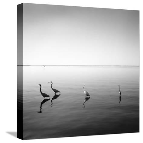 4 Herons-Moises Levy-Stretched Canvas Print
