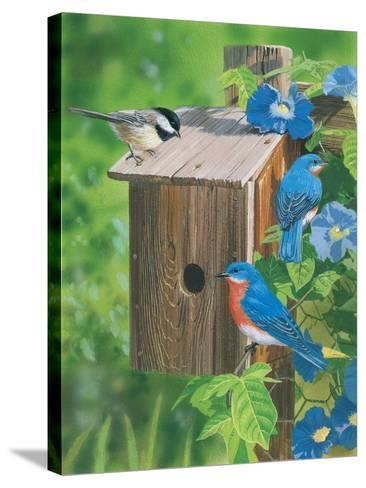 Birds at the Feeder (Bluebirds)-William Vanderdasson-Stretched Canvas Print