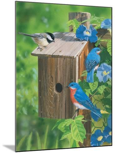 Birds at the Feeder (Bluebirds)-William Vanderdasson-Mounted Giclee Print