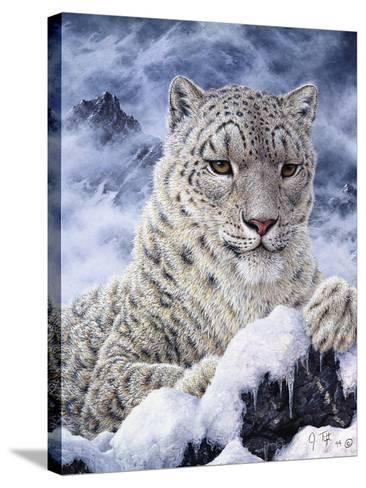 Cat-Jeff Tift-Stretched Canvas Print