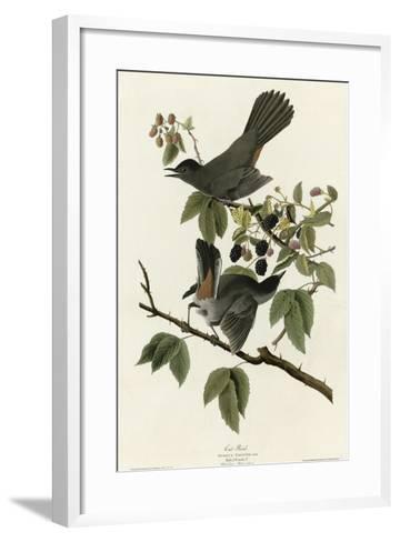 Catbird--Framed Art Print