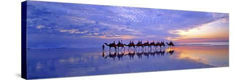 Cable Beach Camels-Wayne Bradbury-Stretched Canvas Print
