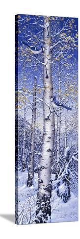 Blue Jay-Jeff Tift-Stretched Canvas Print