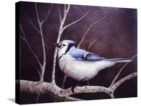 Blue Jay-Kevin Dodds-Stretched Canvas Print