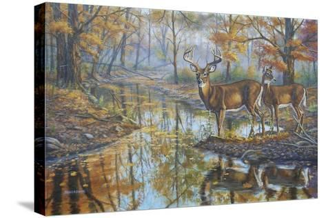 Brookside Retreat - Whitetails-Bruce Dumas-Stretched Canvas Print