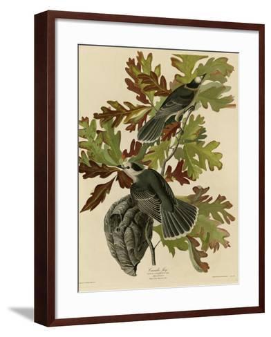 Canada Jay--Framed Art Print