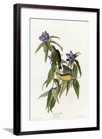 Connecticut Warbler--Framed Art Print