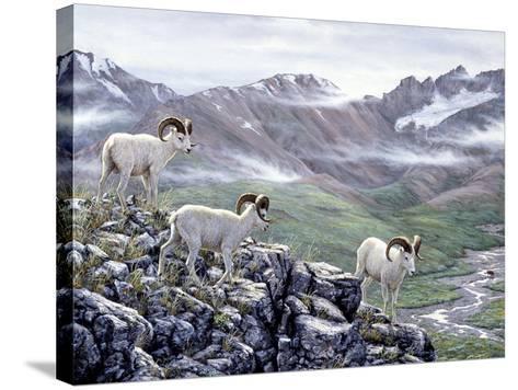 Dall Sheep at Denali-Jeff Tift-Stretched Canvas Print
