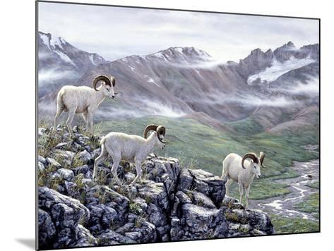 Dall Sheep at Denali-Jeff Tift-Mounted Giclee Print