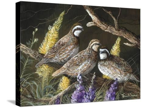 Bobwhite Trio 1-Trevor V. Swanson-Stretched Canvas Print