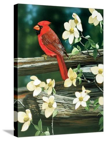 Cardinal-William Vanderdasson-Stretched Canvas Print