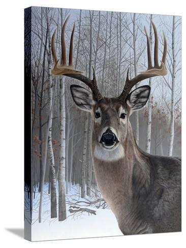 Deer-Rusty Frentner-Stretched Canvas Print