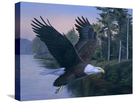 Eagle Soaring-Rusty Frentner-Stretched Canvas Print