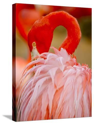 Flamingo 2-Dennis Goodman-Stretched Canvas Print