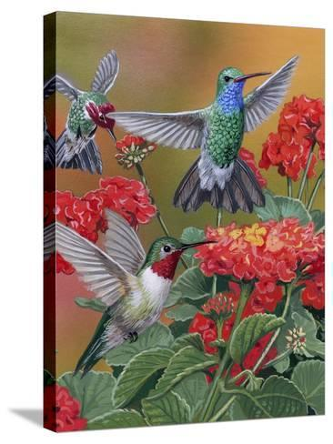 Hummingbirds and Flowers-William Vanderdasson-Stretched Canvas Print