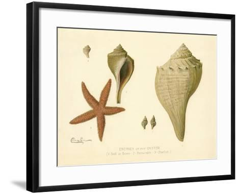Enemies of the Oyster--Framed Art Print