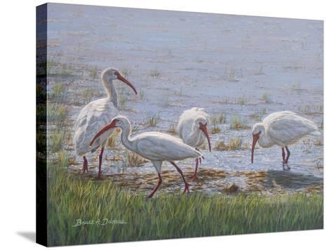 Ibis Excursion-Bruce Dumas-Stretched Canvas Print