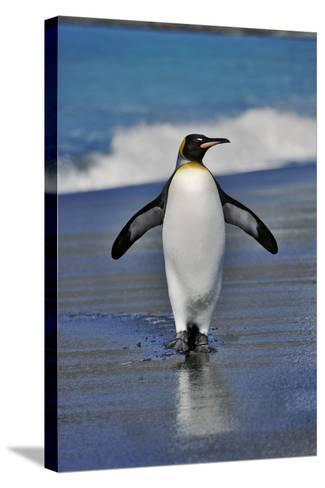King Penguin on the Beach-Martin Harvey-Stretched Canvas Print