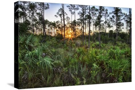 Sunrise in Mahogany Hammock-Terry Eggers-Stretched Canvas Print