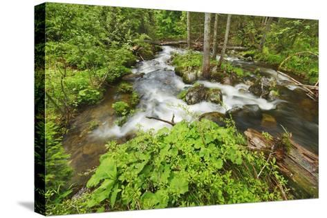 Forest Brook in Beech Forest with Deadwood-Frank Krahmer-Stretched Canvas Print