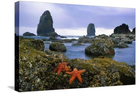 Cannon Beach Panoramic-Steve Terrill-Stretched Canvas Print