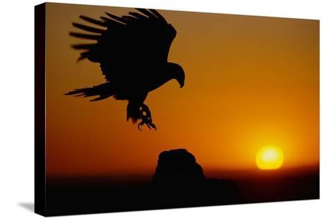 Golden Eagle at Sunset-W^ Perry Conway-Stretched Canvas Print