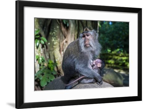 Crab-Eating Macaque (Macaca Fascicularis) Mother with Baby, Monkey Forest, Ubud, Bali, Indonesia-Michael Runkel-Framed Art Print