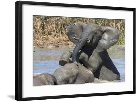 African Elephants (Loxodonta Africana) Drinking and Bathing at Hapoor Waterhole-Ann and Steve Toon-Framed Art Print