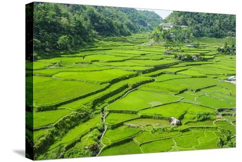 Hapao Rice Terraces, Banaue, UNESCO World Heritage Site, Luzon, Philippines, Southeast Asia, Asia-Michael Runkel-Stretched Canvas Print