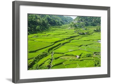 Hapao Rice Terraces, Banaue, UNESCO World Heritage Site, Luzon, Philippines, Southeast Asia, Asia-Michael Runkel-Framed Art Print
