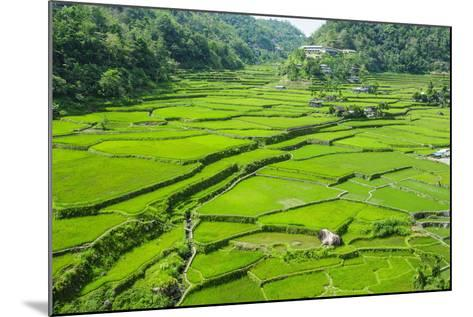 Hapao Rice Terraces, Banaue, UNESCO World Heritage Site, Luzon, Philippines, Southeast Asia, Asia-Michael Runkel-Mounted Photographic Print