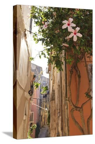 Narrow Street and Hibiscus Flowers, Old Town, Corfu Town-Eleanor Scriven-Stretched Canvas Print