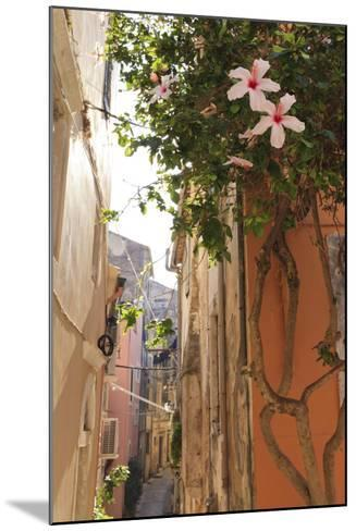 Narrow Street and Hibiscus Flowers, Old Town, Corfu Town-Eleanor Scriven-Mounted Photographic Print