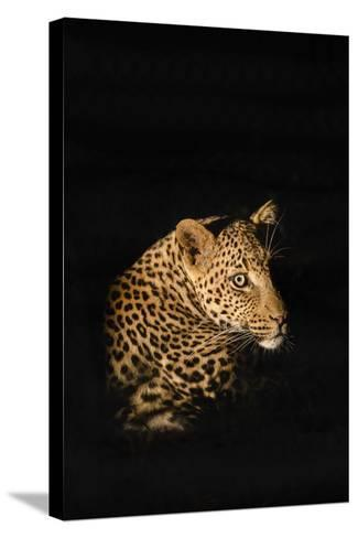 Leopard (Panthera Pardus), Madikwe Game Reserve, South Africa, Africa-Ann and Steve Toon-Stretched Canvas Print