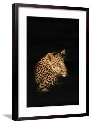 Leopard (Panthera Pardus), Madikwe Game Reserve, South Africa, Africa-Ann and Steve Toon-Framed Art Print