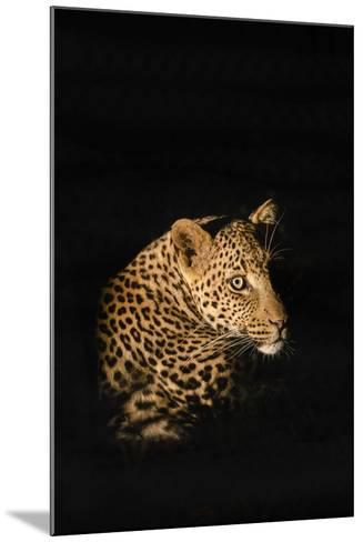 Leopard (Panthera Pardus), Madikwe Game Reserve, South Africa, Africa-Ann and Steve Toon-Mounted Photographic Print