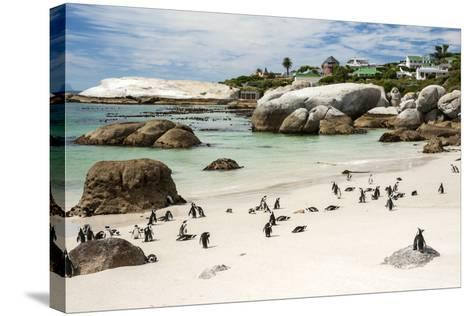 African Penguins on Sand at Foxy Beach with Residential Homes in Background-Kimberly Walker-Stretched Canvas Print